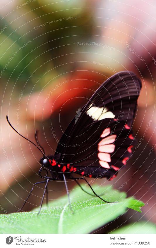 herbstfarben Natur Pflanze Tier Frühling Sommer Schönes Wetter Baum Blatt Garten Park Wiese Wildtier Schmetterling Tiergesicht Flügel 1 beobachten Erholung