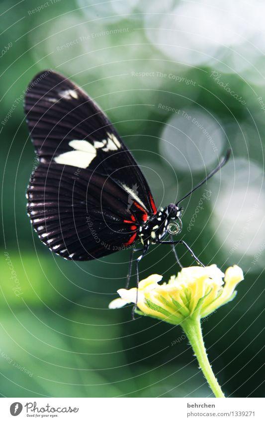 im rampenlicht Natur Pflanze grün schön Sommer Erholung Blume rot Blatt Tier schwarz Blüte Frühling Wiese Garten außergewöhnlich