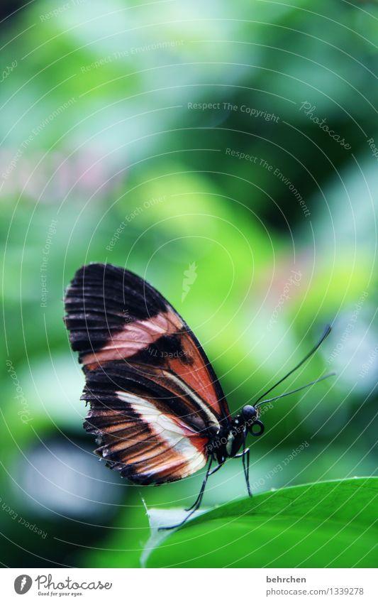 pause Natur Pflanze grün schön Sommer Baum Erholung Blatt Tier schwarz Frühling Wiese Garten außergewöhnlich fliegen Beine