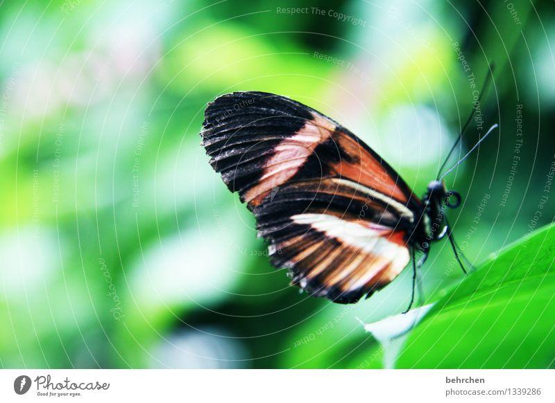 hinauf... Natur Pflanze Tier Sommer Schönes Wetter Baum Sträucher Blatt Garten Park Wiese Wildtier Schmetterling Flügel 1 beobachten Erholung fliegen Fressen