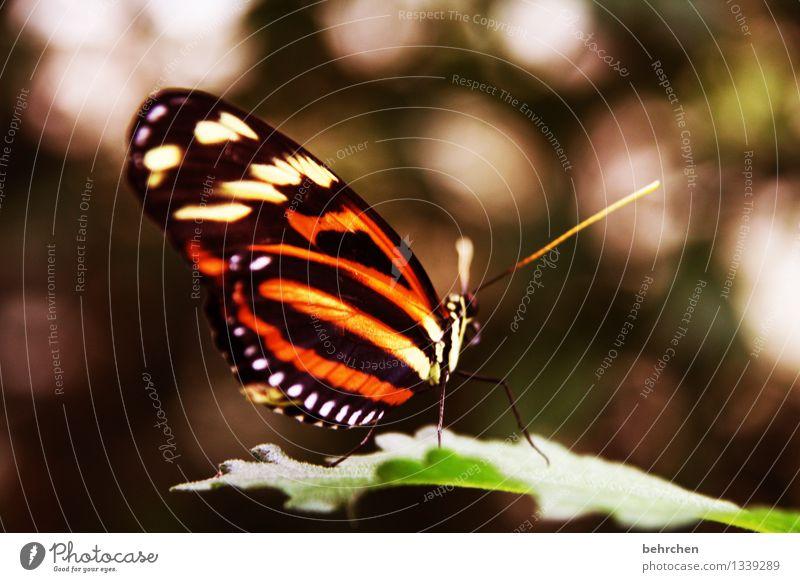 schöne isabella Natur Pflanze Baum Erholung Blatt Tier Wiese außergewöhnlich Garten Beine fliegen orange Park elegant Wildtier