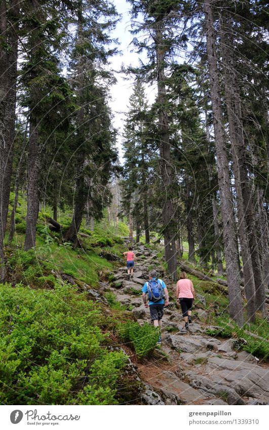 Das Wandern ist... Freizeit & Hobby wandern Wanderausflug Wandertag Wandergruppe Ferien & Urlaub & Reisen Tourismus Ausflug Freiheit Berge u. Gebirge