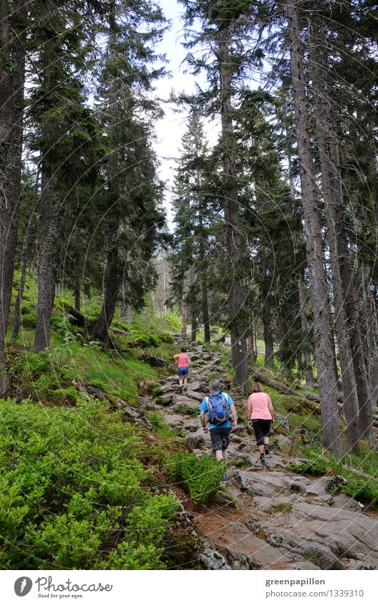 Das Wandern ist... Mensch Frau Natur Ferien & Urlaub & Reisen Jugendliche Mann Junge Frau Baum Wald Berge u. Gebirge Erwachsene Familie & Verwandtschaft