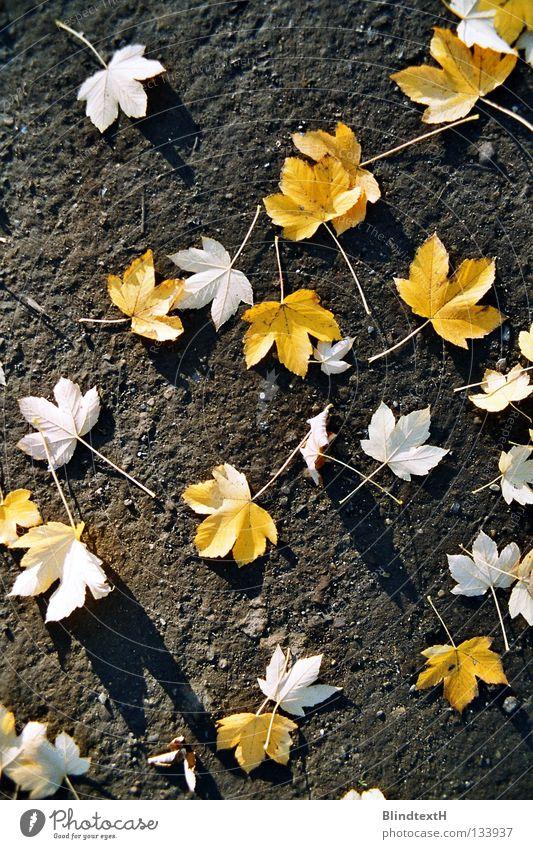 Herbstlaub Blatt Vogelperspektive verteilt gelb schwarz weiß verweht Trauer Vergänglichkeit Erde Sand Bodenbelag Stein gold Wege & Pfade Schatten Traurigkeit