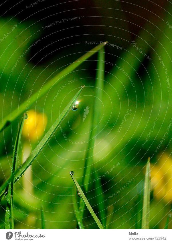 Glitzertropfen Wasser grün Wiese Gras Frühling glänzend klein Wassertropfen Seil Perspektive Rasen Halm hängen Schönes Wetter Märchen Erzählung