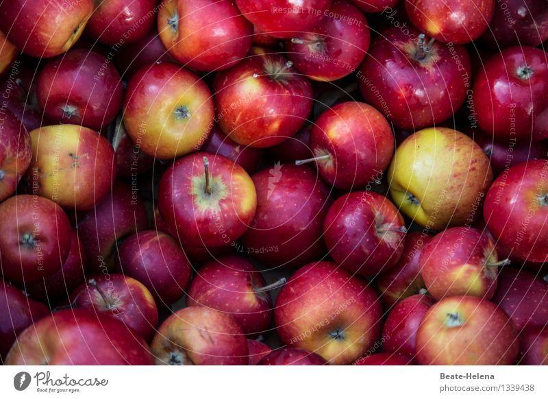 dank guter Ernte schön rot schwarz gelb Herbst Gefühle Essen Gesundheit Lebensmittel Frucht Zufriedenheit frisch ästhetisch Ernährung kaufen süß