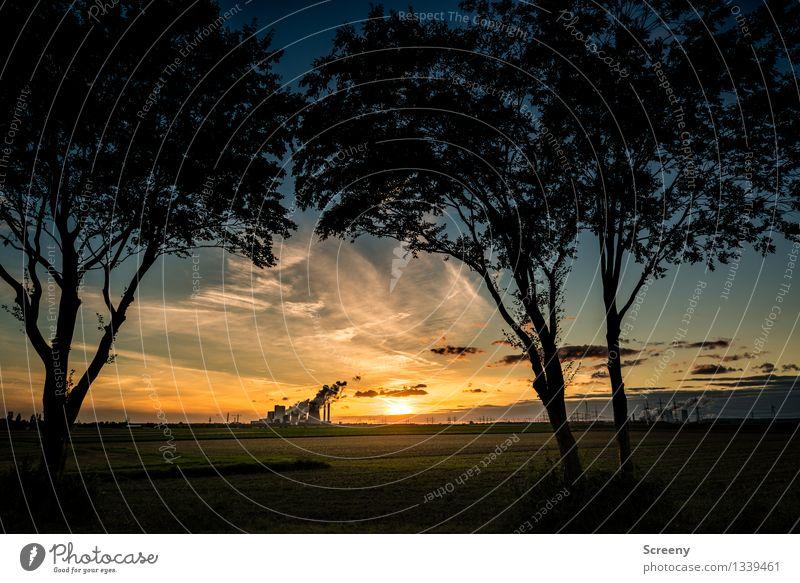 Industrielle Vorstadtromantik Energiewirtschaft Kohlekraftwerk Landschaft Pflanze Himmel Wolken Horizont Sonne Sonnenaufgang Sonnenuntergang Sonnenlicht Sommer