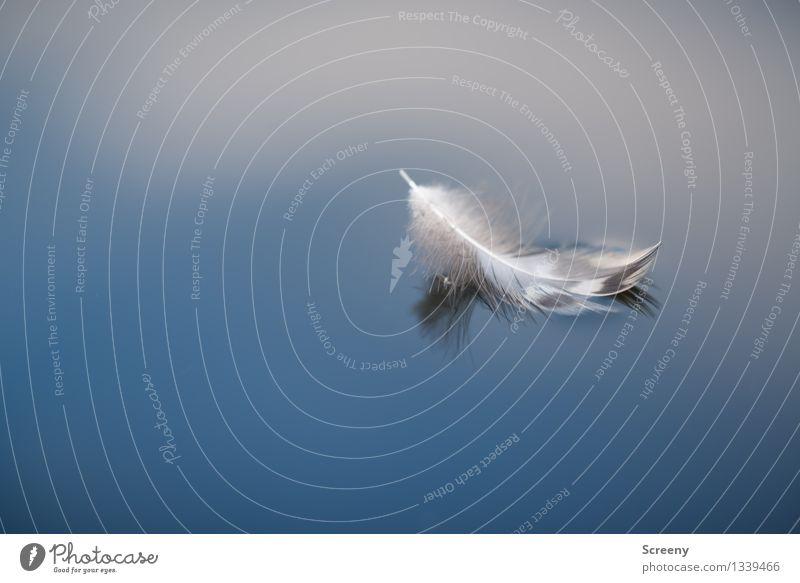 Tragkraft Wasser Teich See Schwimmen & Baden elegant klein blau grau weiß Gelassenheit ruhig Leichtigkeit Feder leicht Im Wasser treiben Farbfoto Außenaufnahme