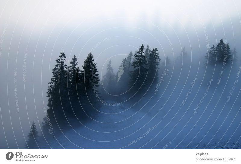 Blauwald Wald Tanne Nadelbaum Nebel Winter kalt dunkel mystisch gruselig Einsamkeit weiß unklar unsicher Berge u. Gebirge Schnee Angst blau Unschärfe