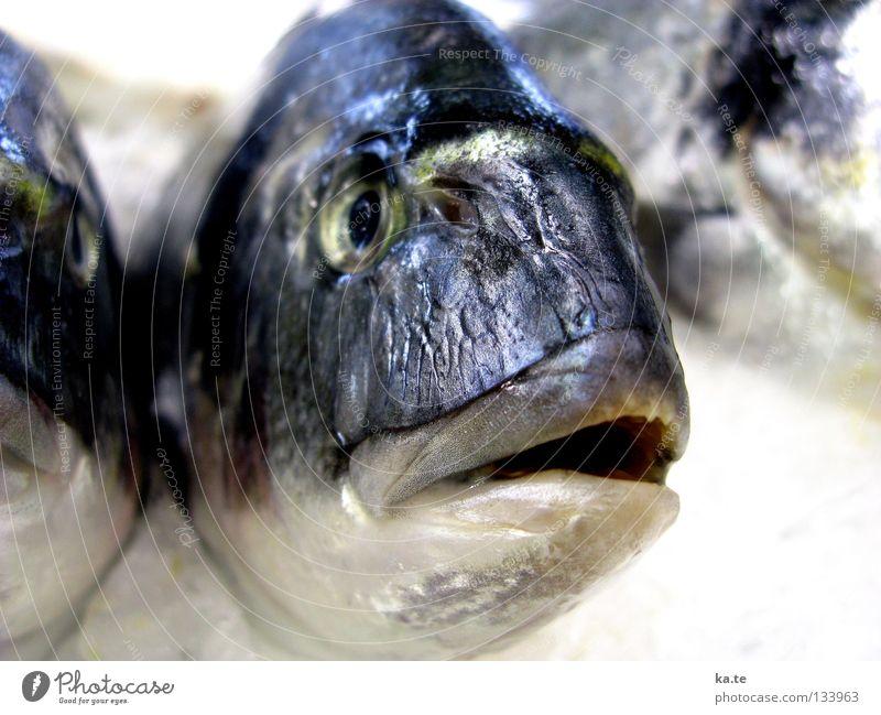 Fischkopp Wasser weiß Meer schwarz Tier Auge kalt Tod grau glänzend geschlossen nah Gastronomie gefroren silber