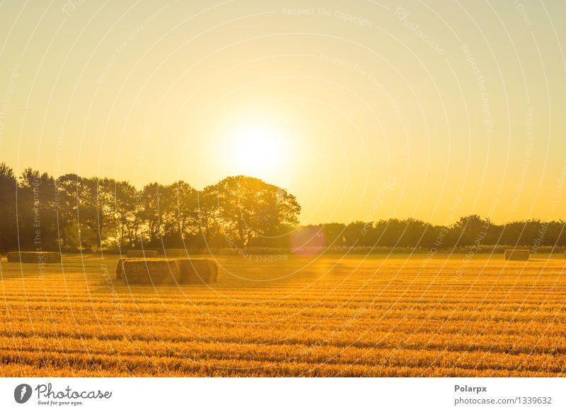 Strohballen im Sonnenaufgang schön Sommer Industrie Umwelt Natur Landschaft Pflanze Himmel Herbst Gras Wiese Wachstum natürlich blau gelb gold Western Feld