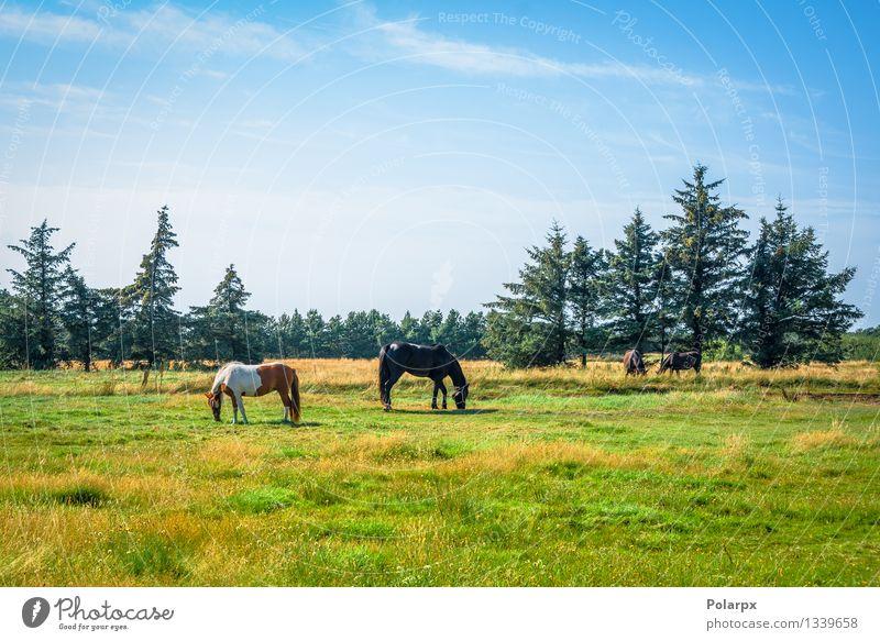 Pferde auf einem Feld Natur Landschaft Tier Gesicht Sport braun elegant Aktion Fotografie Bauernhof harmonisch Säugetier Fressen Konkurrenz Leder