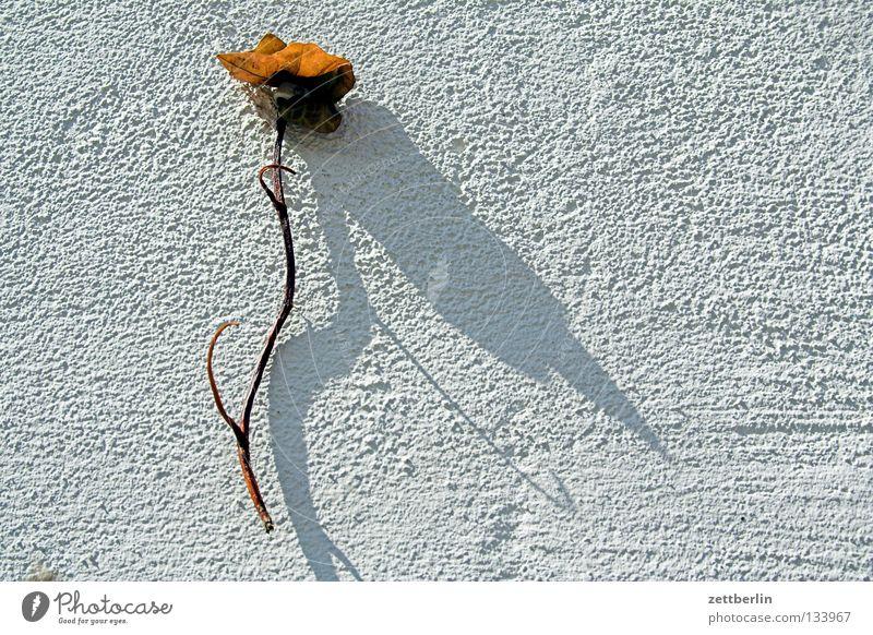 Blume... weiß Pflanze Wand Blüte Dekoration & Verzierung Romantik Blühend Stengel Schmuck Putz verschönern Ornament Ranke Kletterpflanzen Kalk