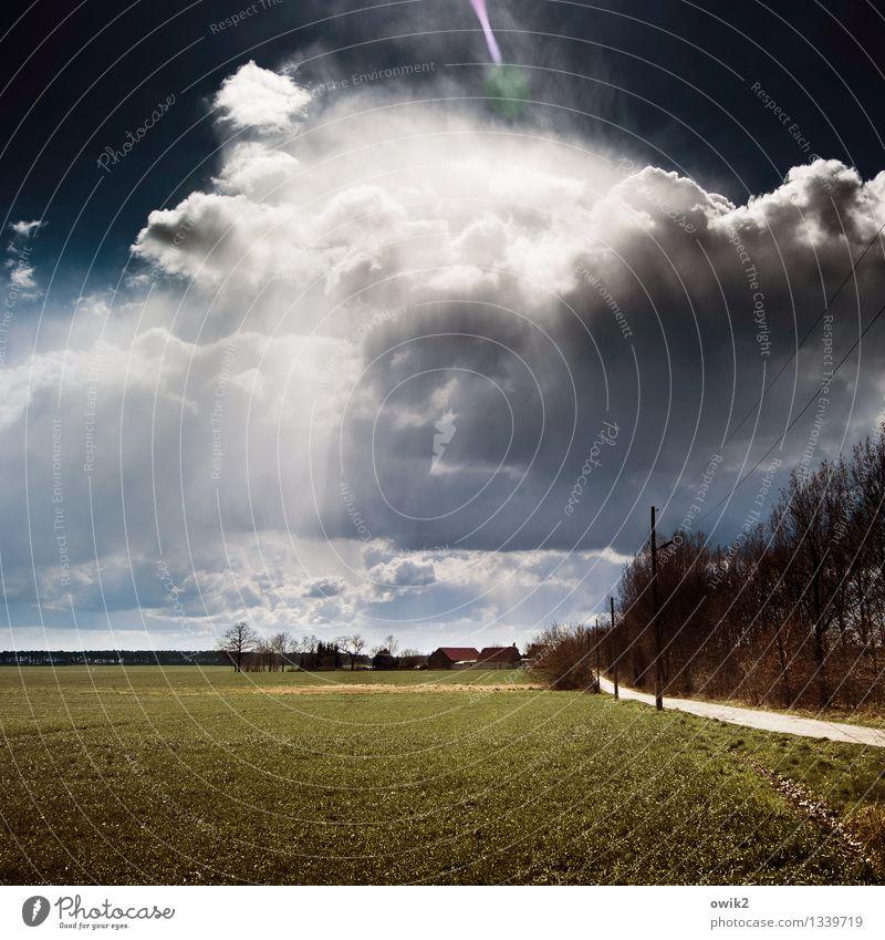 Irgendwo in Brandenburg Himmel Natur Pflanze Baum Landschaft Wolken Haus Ferne Umwelt Gras Wege & Pfade natürlich oben Deutschland Horizont glänzend