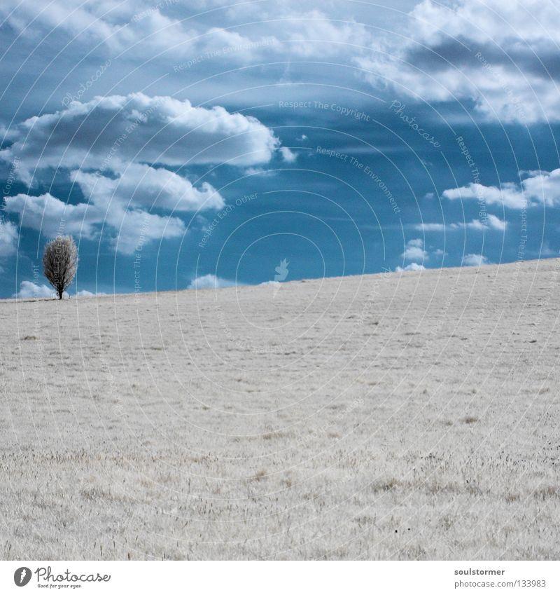einsam ... -|- Die Infrarotzeit hat begonnen! Himmel Natur blau weiß Baum Wolken Einsamkeit ruhig Ferne Erholung Landschaft Wiese Schnee Holz Gras