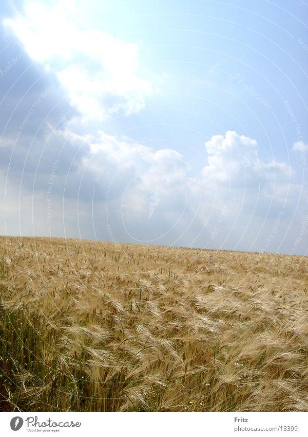 täglich-brot Himmel Sommer Feld Korn