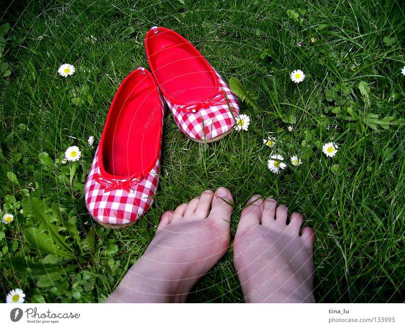 frühlingsschuh Frühling frisch Wiese Gras grün Gänseblümchen grasgrün Blume Schuhe rot kariert Sommer sommerlich weiß Zehen Barfuß Halm Löwenzahn ausschalten