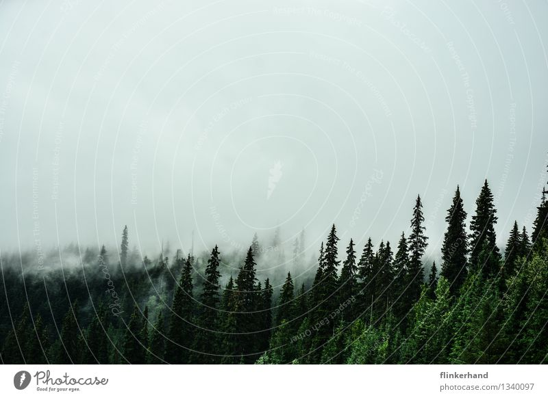 drei tannen Natur Landschaft Pflanze Klima schlechtes Wetter Nebel Wald Berge u. Gebirge Kanada British Columbia Nordamerika Menschenleer wandern dunkel