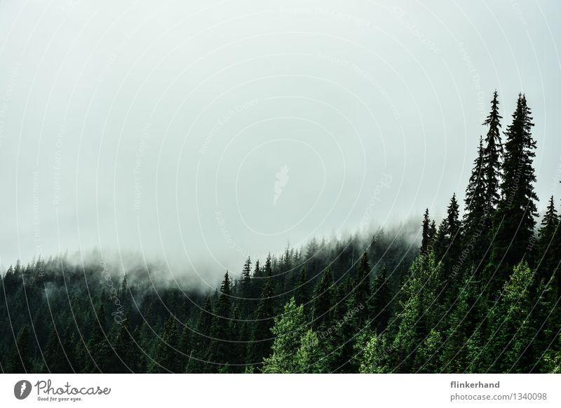 zwei tannen Himmel Natur Pflanze grün weiß Landschaft Wolken dunkel Wald schwarz Berge u. Gebirge Herbst Nebel wandern groß Klima