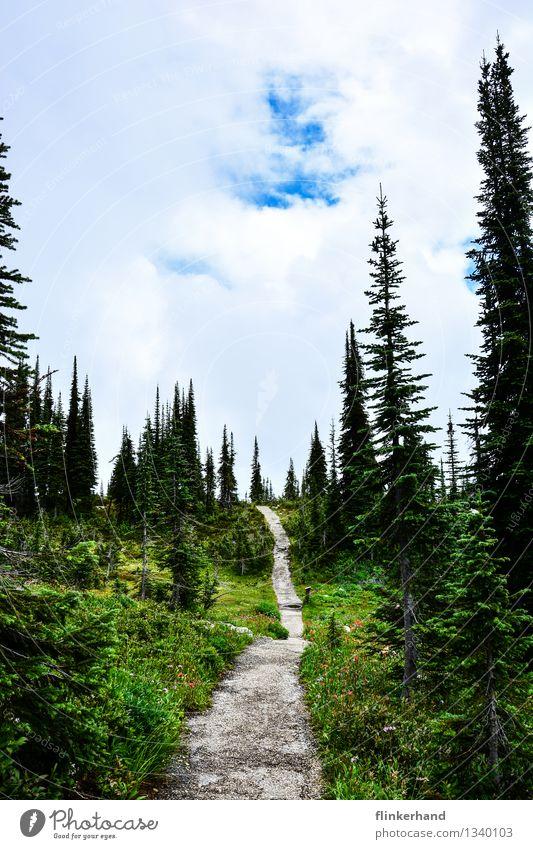 wanderlust Himmel Natur Ferien & Urlaub & Reisen Pflanze blau grün Wolken Ferne Wald Berge u. Gebirge Wege & Pfade Freiheit braun gehen Wetter Freizeit & Hobby