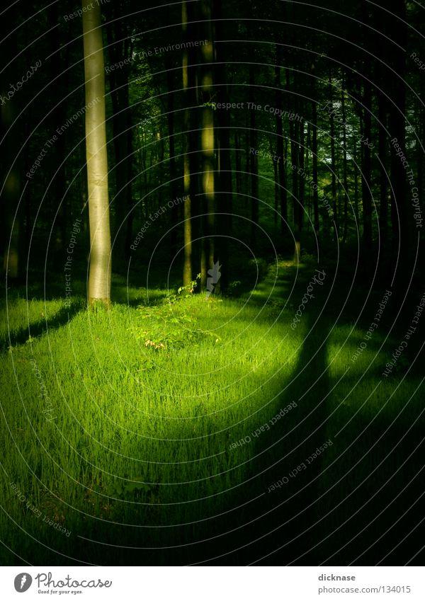 Grün Wald grün Frühling Sommer Farbstoff Farbe Farben und Lacke Schatten Licht & Schatten Baumstamm Gras Wiese Spaziergang Hund verschwunden Landschaft