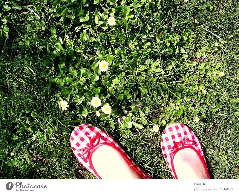 frühlingsschuh I Frühling frisch Wiese Gras grün Gänseblümchen grasgrün Blume Schuhe rot kariert Sommer sommerlich weiß Zehen Barfuß Halm Löwenzahn ausschalten