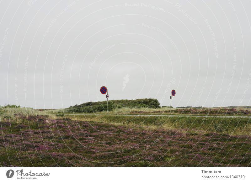 Halteverbot. Ferien & Urlaub & Reisen Sommer Natur Pflanze Himmel Schönes Wetter Baum Dänemark Straße Verkehrszeichen blau grün violett Farbfoto Außenaufnahme