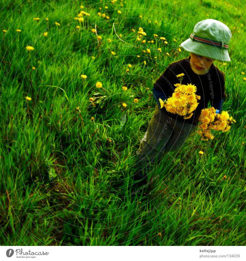 muttertag Kind Gras Wiese Blume Löwenzahn Mann Mensch Vatertag Spielen Wachstum gehen fallen Sommer Frühling springen Kleinkind Luft Leben Lifestyle