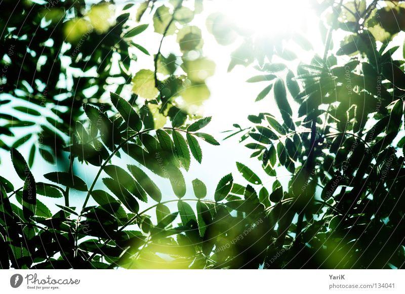 durchsicht Himmel blau grün Farbe Sommer Baum Sonne Blatt gelb Wärme Leben Graffiti Frühling Beleuchtung hell Energiewirtschaft