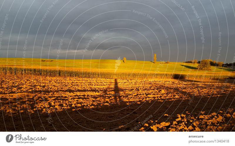 Herbst mit Fahrrad Fahrradfahren Landschaft Erde Wolken Sonne Sonnenaufgang Sonnenuntergang Sonnenlicht Schönes Wetter Feld entdecken Blick Unendlichkeit gold