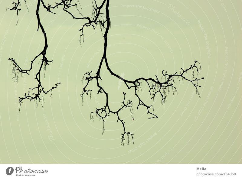 Geäst Baum dunkel grau Traurigkeit Angst Arme trist Trauer Ast unten gruselig fangen Zweig Rahmen hängen Verzweiflung