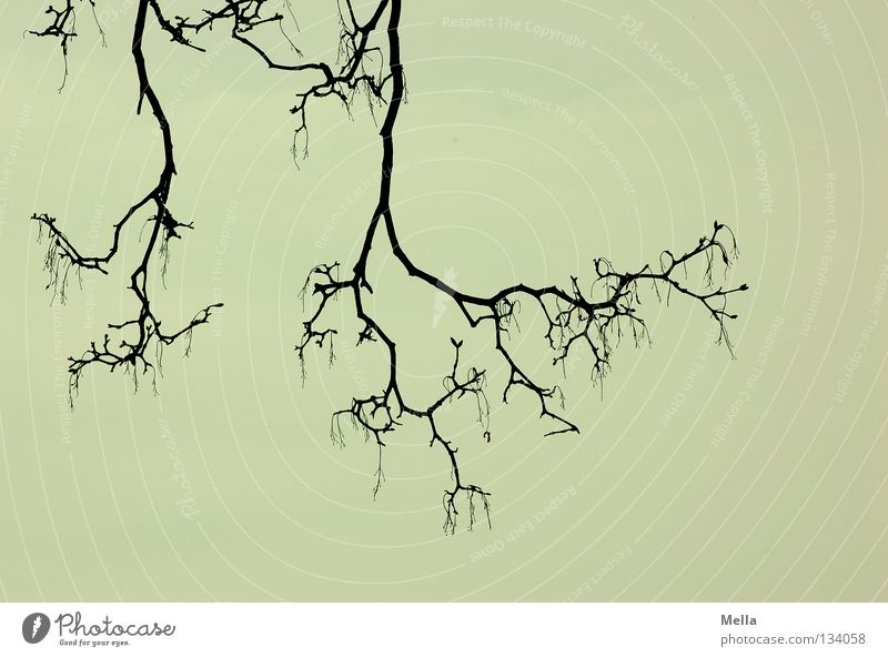 Geäst verzweigt Baum gruselig grauenvoll unheimlich dunkel trüb trist Trauer hängen unten Silhouette Waldrand Verzweiflung Angst Panik Ast Zweig verästelt Arme