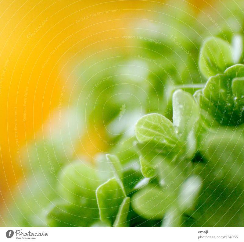 fresh II frisch Regen Wassertropfen gelb leicht beweglich Schwerelosigkeit Schweben Unschärfe Blume Makroaufnahme Retroring aufgereiht weich zart fein Kurve
