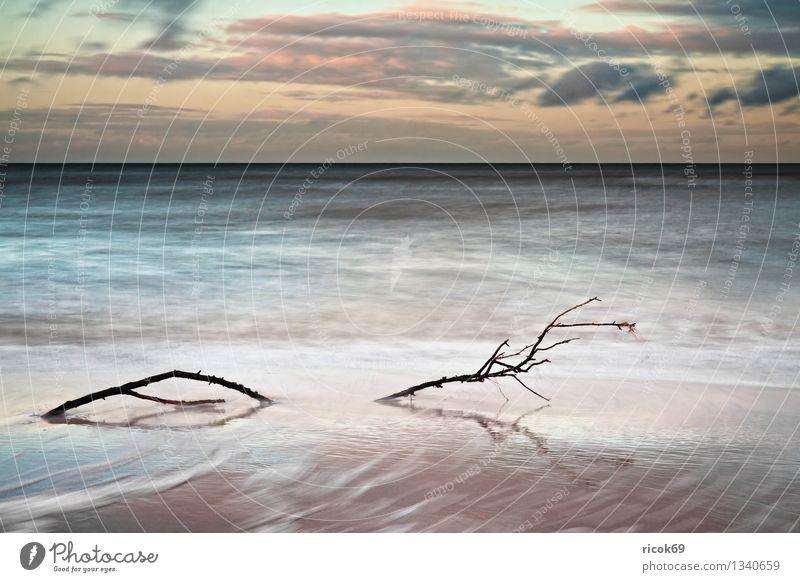 Ostseeküste Ferien & Urlaub & Reisen Strand Natur Landschaft Wasser Wolken Küste Meer blau gelb Romantik Idylle ruhig Tourismus Sonnenuntergang Ast Zweig Himmel