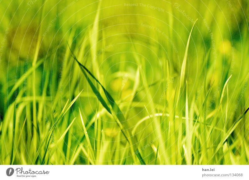 Strahlend Grün Stil Sommer Natur Pflanze Erde Frühling Gras Wiese Feld hängen Wachstum grün Halm durcheinander feucht Stengel Tiefenschärfe Bodenbelag