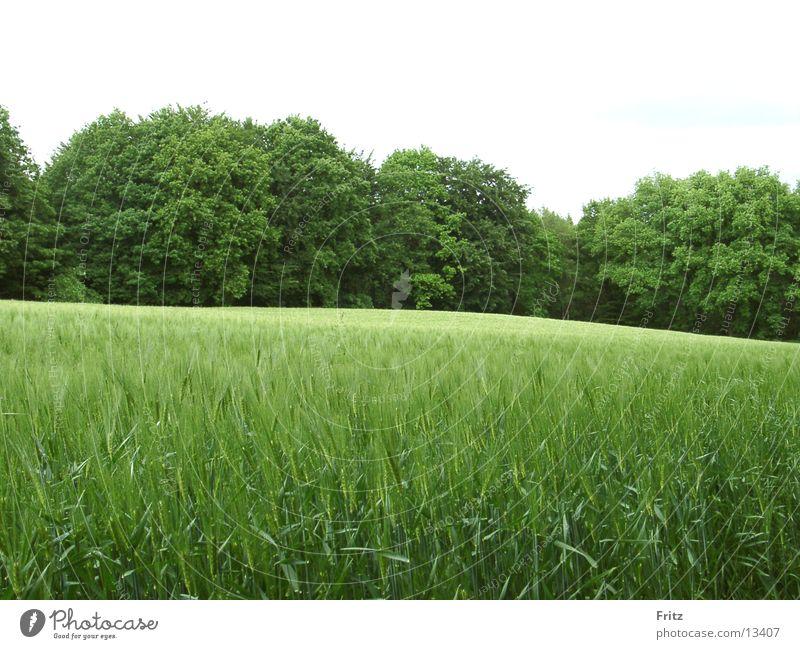 so-viel-grün grün Sommer Wald Feld