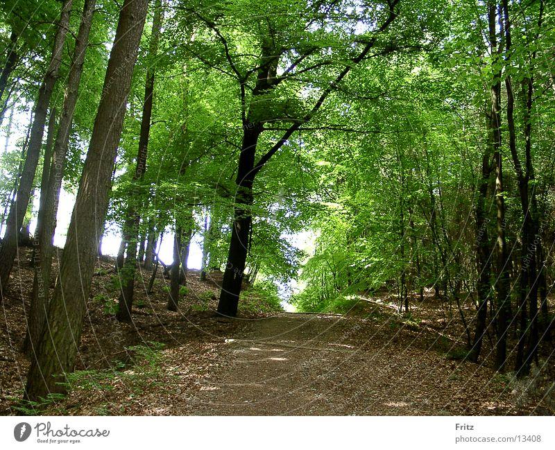 waldweg Sonne Blatt Wald Wege & Pfade