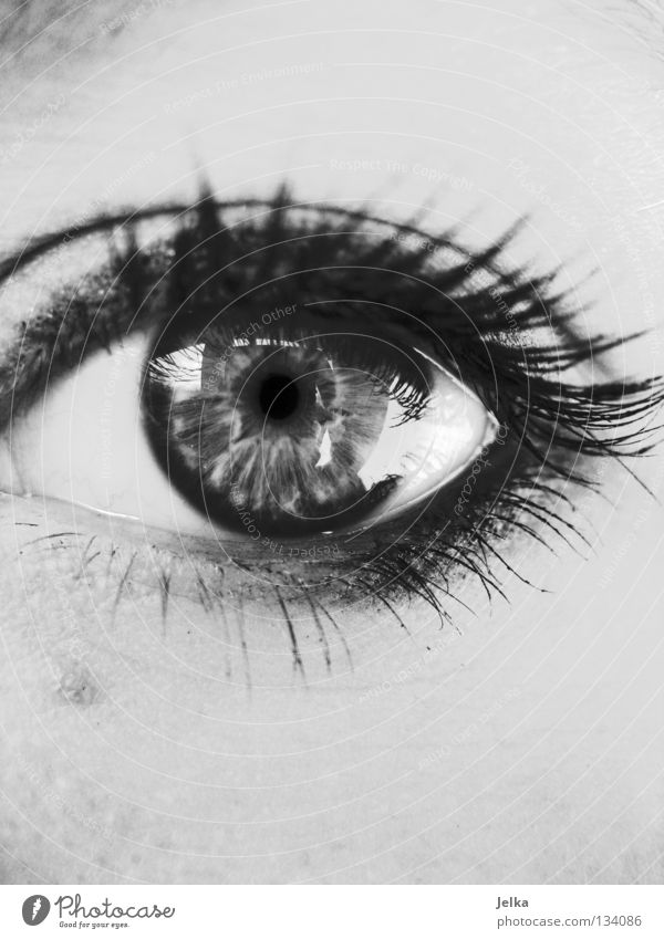 augen auf. Gesicht Schminke Wimperntusche Mensch Frau Erwachsene Auge grau geschminkt gray black white b/w face faces eye eyes lash lashes wimpernaufschlag