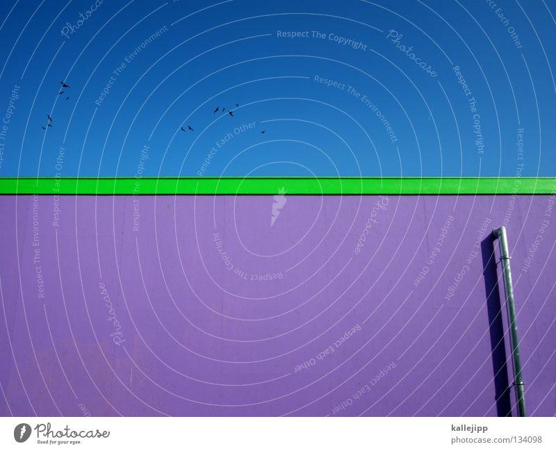 blagrülett Himmel blau grün Tier Farbe Wand Architektur Linie Kunst Vogel fliegen Design frisch Dach violett Gemälde