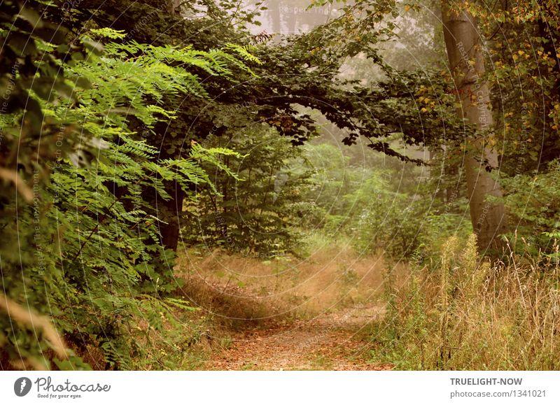 Im Elfenland... Natur Landschaft Pflanze Erde Sommer Herbst Schönes Wetter Nebel Baum Gras Sträucher Blatt Wildpflanze Park Wald Hügel nah natürlich Sauberkeit