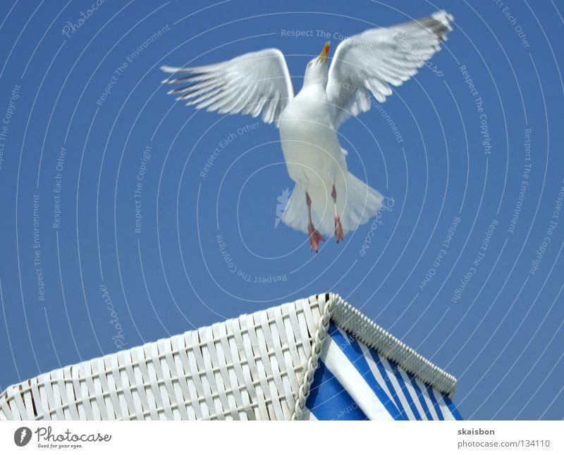 sterbender schwan blau weiß Ferien & Urlaub & Reisen Meer Sommer Strand Erholung Wärme Küste Deutschland Arbeit & Erwerbstätigkeit Vogel Freizeit & Hobby fliegen Beginn frei