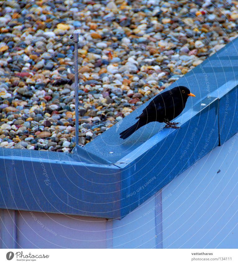 The Lonely Bird Natur springen Vogel Lied Amsel