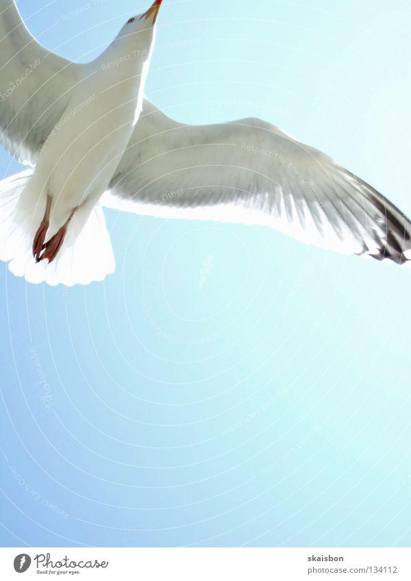 gleitflug schön Erholung Freizeit & Hobby Ferien & Urlaub & Reisen Sommer Sonne Strand Meer Luftverkehr Natur Himmel Wärme Küste Nordsee Ostsee Vogel Flügel