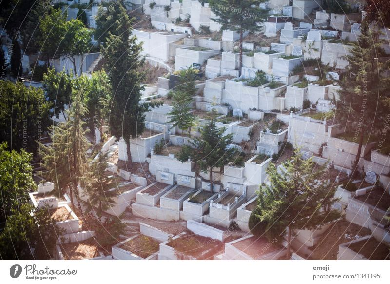 Friedhof Natur Umwelt Schönes Wetter gruselig Sehenswürdigkeit Grab Grabstein