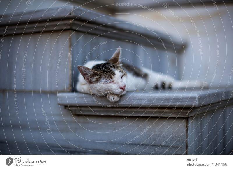 Pause Tier Haustier Katze Tiergesicht Fell 1 liegen schlafen ruhig Farbfoto Außenaufnahme Dämmerung Schwache Tiefenschärfe Tierporträt geschlossene Augen
