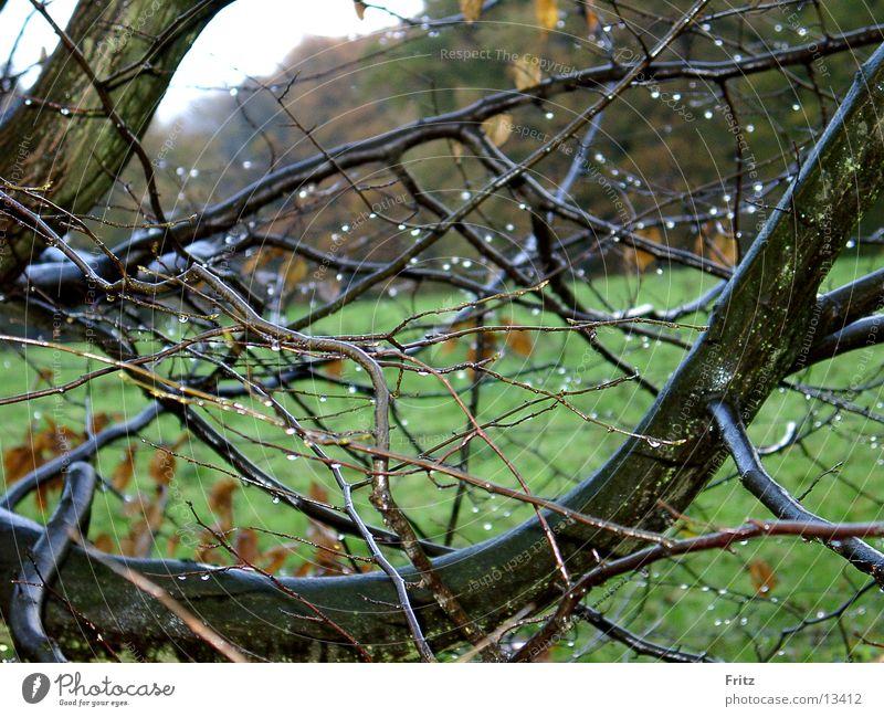 regen Herbst schlechtes Wetter Regen Wassertropfen