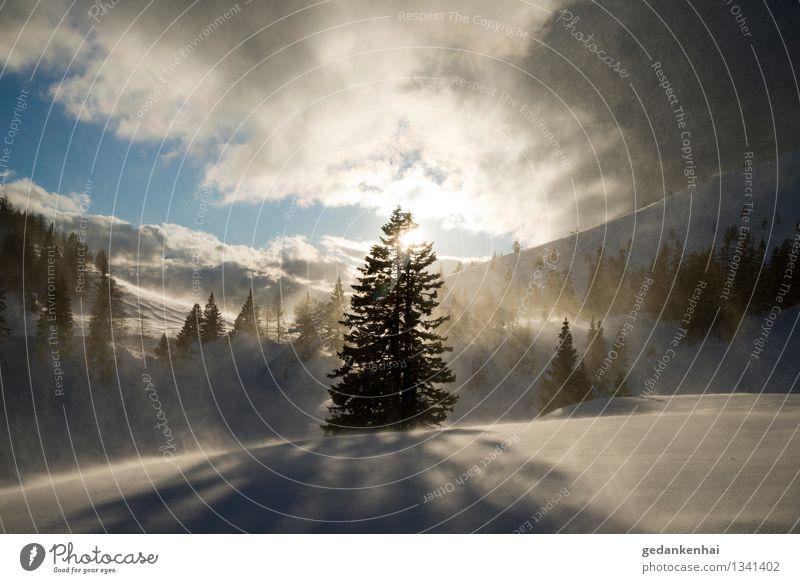 ein schöner Sturm Umwelt Natur Landschaft Himmel Sonne Sonnenlicht Winter Eis Frost Schnee Baum Alpen Schneebedeckte Gipfel Glück Coolness Kraft Mut Ewigkeit