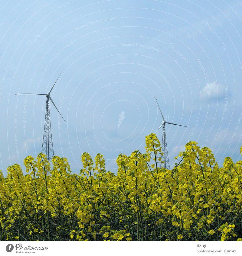 zwei Windkraftanlagen stehen hinter gelb blühendem Raps vor blauem Himmel streben Länge quer 2 emporragend groß rotieren drehen Elektrizität Erneuerbare Energie