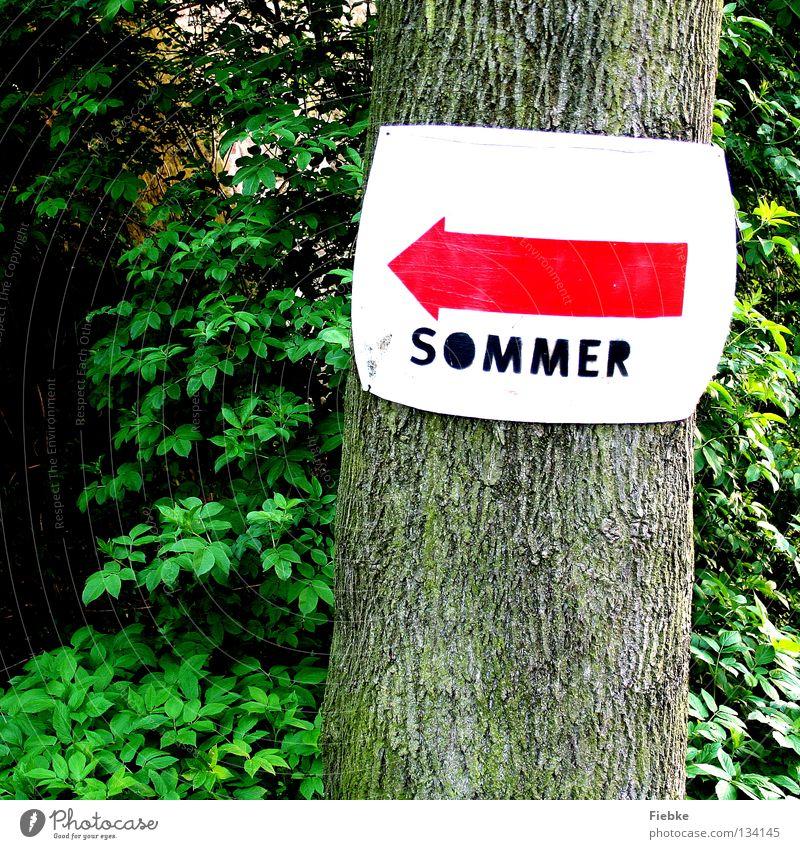 Da gehts lang! weiß Baum grün rot Sommer Freude Ferien & Urlaub & Reisen Blatt Wald Arbeit & Erwerbstätigkeit träumen Wege & Pfade warten gehen Suche Schilder & Markierungen