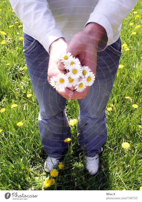 Frühlingsgefühle Farbfoto Außenaufnahme Vogelperspektive Sommer Muttertag Geburtstag Mann Erwachsene Freundschaft Hand 18-30 Jahre Jugendliche Blume Gras Wiese